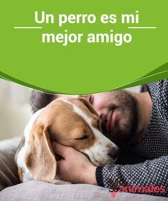 Un Perro Es Mi Mejor Amigo Mis Animales Perros Perro Mejor Amigo Adiestramiento Perros