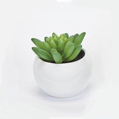 Desktop Succulent Plant In Ceramic Pot Small Artificial Plants Artificial Plants Outdoor Planting Succulents