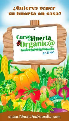 Almácigos Plantines Huerta Orgánica El Huerto Orgánico Siembra Semilleros Almacigueros Cómo Sembrar Nac Huerto Organico Huerta Organica En Casa Huerto