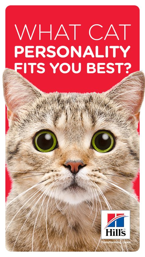 Choosing The Right Cat Personality For Your Lifestyle Cat Breeds Cats Best Cat Breeds