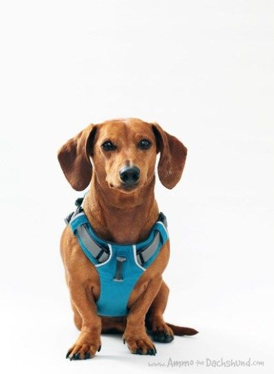 Ruffwear Front Range Harness Review Giveaway Ammo The