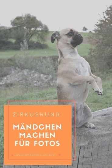 Mandchen Part 2 Die Ausdauer In 2020 Mit Bildern Hunde