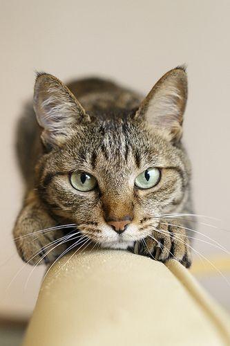 Cute Cats Cat Nose Cat Face