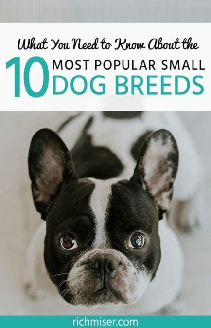 Trendy Dogs Breeds That Dont Shed Top 10 22 Ideas Dogs Dog