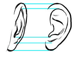 Draw Ears Front View Google Search How To Draw Ears Eye Drawing Facial Expressions Drawing