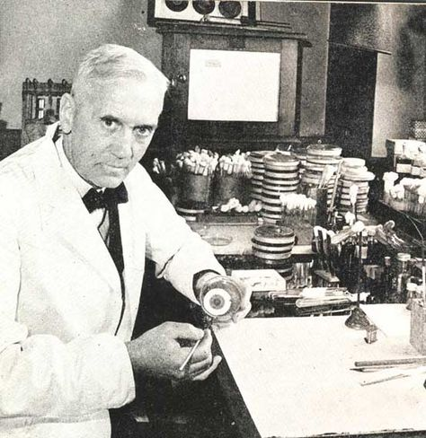 Alexander Fleming Discovered Penicillin In 1928 The First