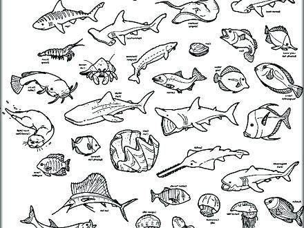 Coloring Pages Of The Ocean Ocean Animal Coloring Pages Ocean Coloring Pages Printable Ocean Ani Sea Animals Drawings Cartoon Sea Animals Animal Coloring Pages