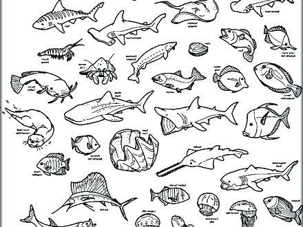 Ocean Animals Coloring Www.robertdee.org