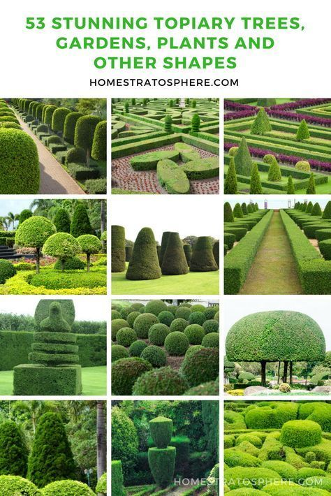 53 Stunning Topiary Trees Gardens Plants And Other Shapes Gardens Landscaping Topiary Topiary Plants Garden Landscape Design Backyard Landscaping Designs