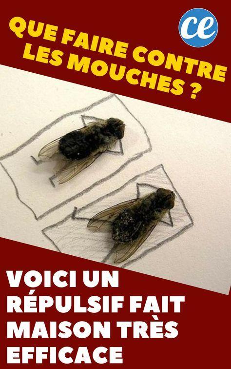 Faire Fuir Les Mouches : faire, mouches, Faire, Contre, Mouches, Voici, Répulsif, Maison, Très, Efficace., Mouches,, Mouche, Maison,