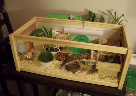 hamster aquarium setup