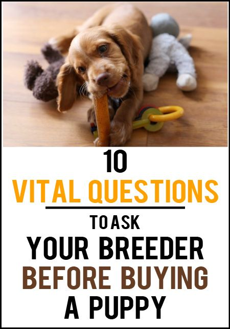 Questions To Ask Your Breeder Before Buying A Puppy Easiest Dogs To Train Puppy Training Buy Puppies