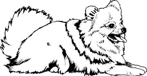 Image Result For Pomeranian Coloring Pages Dog Coloring Page
