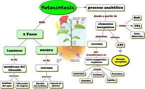 Resultado De Imagen Para Esquema De La Fotosintesis Para Completar Fotosintesis De Las Plantas Proceso De La Fotosintesis Fotosintesis