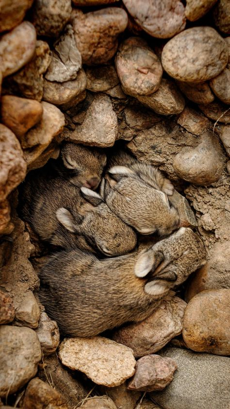 Photograph nest of bunnies #1 by Johnny Gomez on 500px