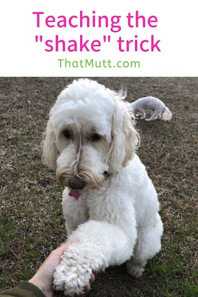 How To Teach Your Dog To Shake Mutts Dog Training Methods