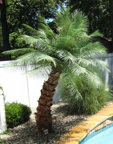 Outdoor Artificial Palm Trees Poollandscapingideas Palm Trees Landscaping Pool Landscaping Backyard Beach
