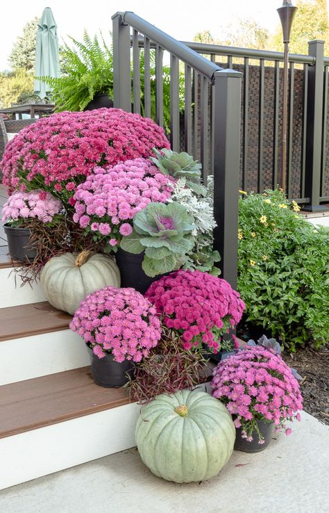 Beautiful Fall Garden Decor Ideas For Inspiration Beautiful Fall Garden Decor Ideas For Inspiration,Flur gestalten – The backyard porch, patio, or deck is a favorite place for many people to relax and. Purple Mums, Fall Mums, Decoration Entree, Fall Containers, Fall Planters, Mums In Planters, Autumn Garden, Fall Flowers, Flowers On Porch