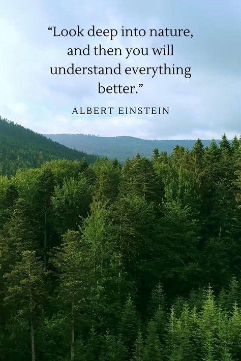 Motivating quote by Albert Einstein about nature