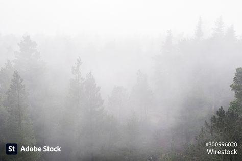 Foggy forest on a gloomy day