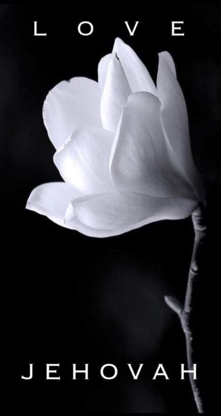 39 trendy flowers fondos blanco y negro #flowers