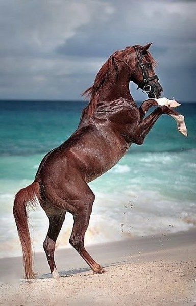 51 Trendy Photography Animal Strength #photography