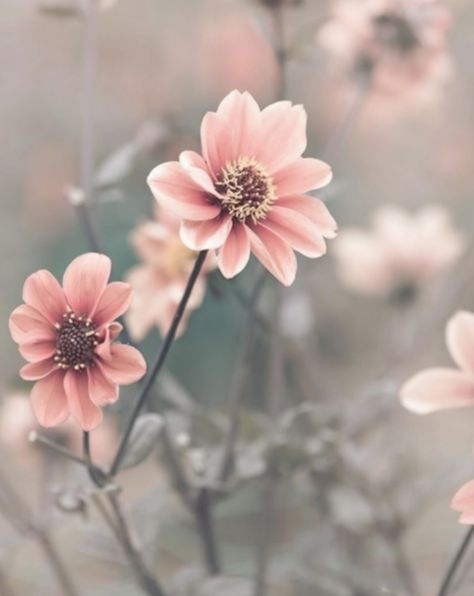 11+ Cute Pink Pictures Beautiful