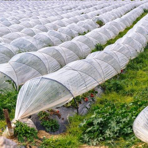 Veg Garden, Edible Garden, Garden Tools, Vegetable Gardening, Backyard Projects, Garden Projects, Lawn And Landscape, Mother Earth News, Mini Greenhouse