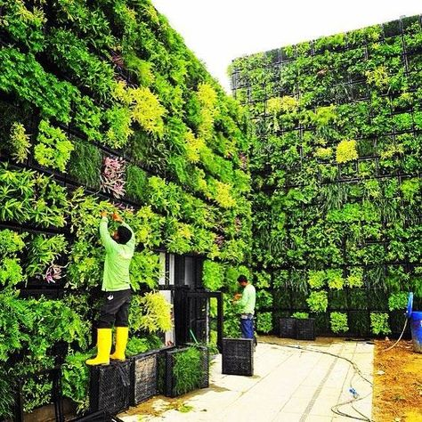 Vertical gardening isn't only productive its also beautifulLike and tag a friend its a great cure for winter blues!#verticalfarming #urbanfarming #organicfarming #food #agriculture