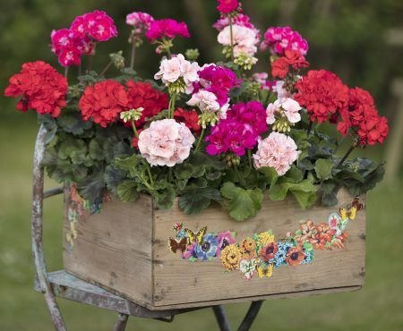 Pelargonie Na 10 Sposobow Floral Wreath Floral Garden