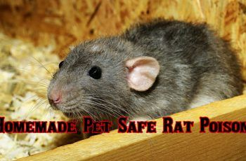 How To Make Homemade Pet Safe Rat Poison That Will Kill Rats Rat Poison Pet Safe Wild Animal Park