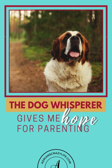 The Dog Whisperer gives me Hope for Parenting