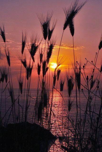 Stunning nature: Evening Sun
