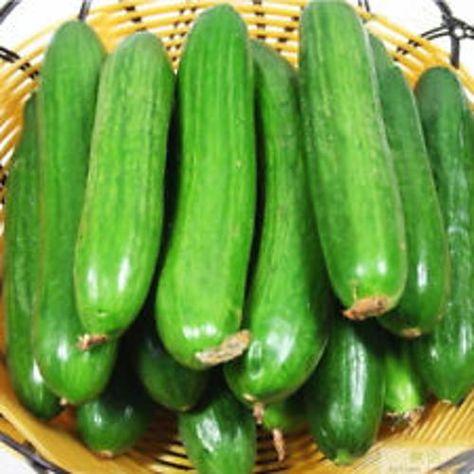 Round Cucumber 5 Seed Liveseeds