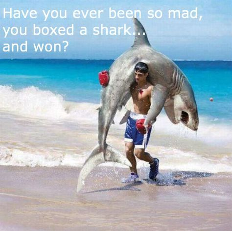 ¿Alguna vez has estado tan enojado, que encajonaste un tiburón...y ganaste?  ||Lynn... ;)