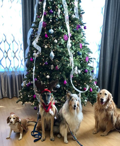 Visit To Nursing Home With Therapy Dogs With Images Therapy Dogs