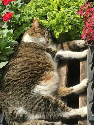 15 Cats Sleeping In Weird Places | Cats, Cat sleeping, Cute cats and kittens
