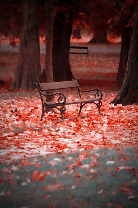 """drxgonfly:  """" bench (by Sanja Dedić)  """""""