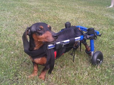 Walkin Wheels Dog Wheelchair Pets Dogs