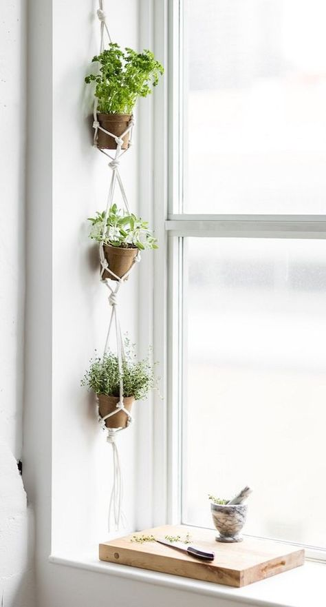 17 Hanging Herb Garden Ideas For Small Spaces! 17 Hanging Herb Garden Ideas For Small Spaces! 17 Hanging Herb Garden Ideas For Small Spaces! 17 Hanging Herb Garden Ideas For Small Spaces! Culture D'herbes, Hanging Herbs, Hanging Herb Gardens, Hanging Succulents, Hanging Plant Diy, Hanging Flower Pots, Decoration Plante, Herbs Indoors, Small Space Gardening