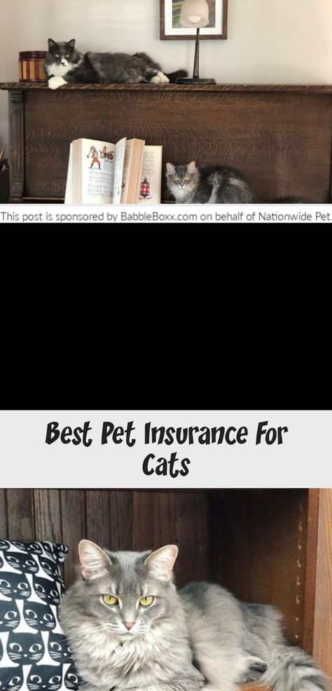 Get A Whole Pet With Wellness Quote From Nationwide Pet For Your Cat For Your Chance To Win The Ultimate Zoo Experience S In 2020 Cat Insurance Best Pet Insurance Cats