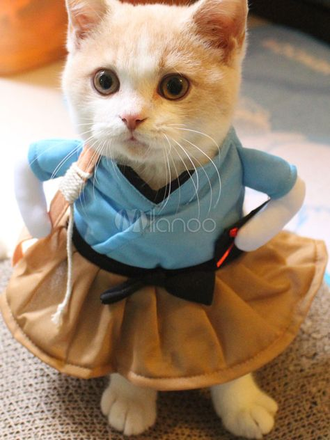 Halloween Cat Costumes Ocean Blue Urashima Taro Pet Costume Halloween