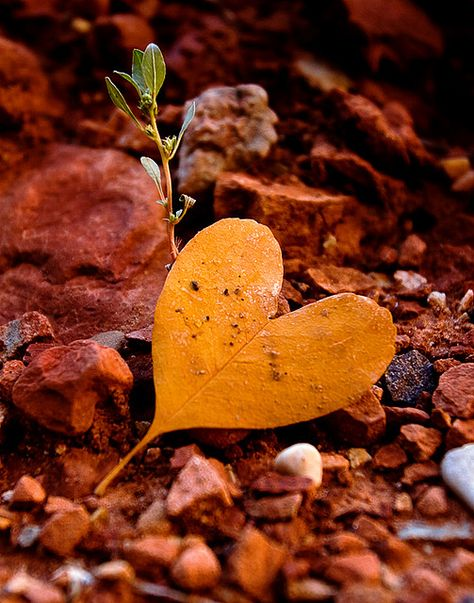 Mother Nature's Heart