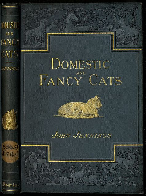 Domestic and Fancy Cats