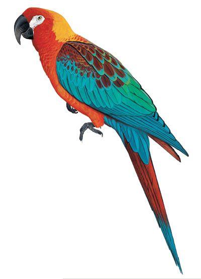 50 Ideas De Loros Para Pintar Loros Aves Tropicales Pinturas De Aves