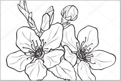 Gambar Ornamen Bunga Sederhana Sketsa Bunga Contoh Lukisan Bunga Sakura Sederhana Kaligrafi Bunga Simple Gambar Isla Menggambar Bunga Cara Menggambar Bunga