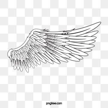 Wing Angel White Png Transparent Clipart Image And Psd File For Free Download Alas De Angel Png Alas De Pajaro Dibujo De Alas