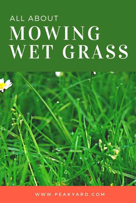 Can You Mow Wet Grass No Mow Grass Grass Lawn Care Tips