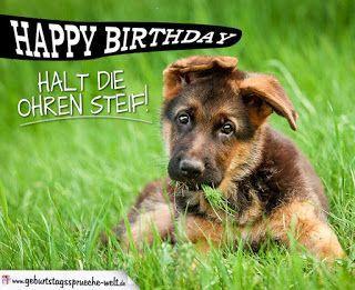 Geburtstagswunsche Fur Hunde Happy Birthday Hund Geburtstagswunsche Hund Gute Nacht Bilder Tiere