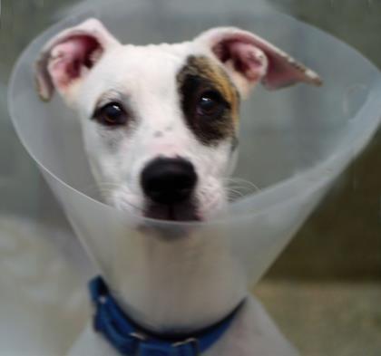 Adopt Journey On Petfinder Help Homeless Pets Adoption Dog Adoption
